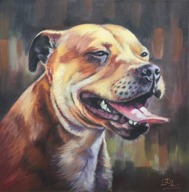 Staffie Portrait
