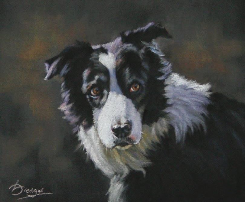 Border Collie Pastel Portrait