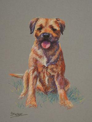 Border Terrier Painting