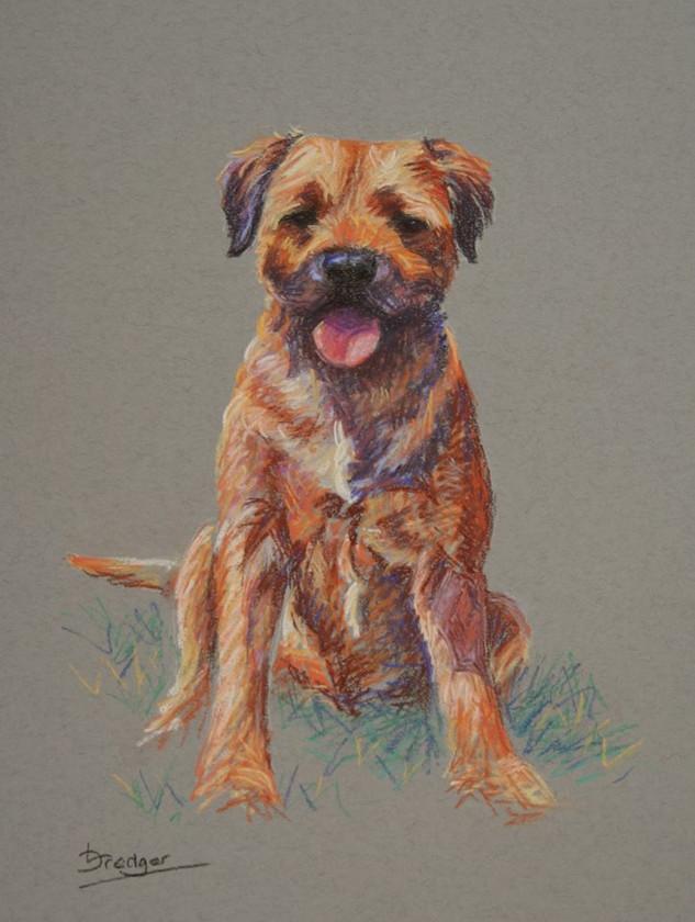 Border Terrier Pastel Painting