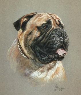 Bull Mastiff Dog Portrait