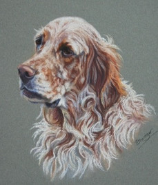 English Setter Pastel Portrait