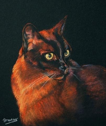 Burmese Cat portrait