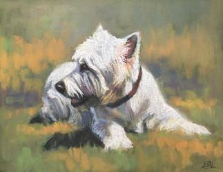 Westie pastel painting