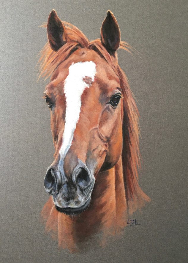 Chestnut Horse Pastel Portrait
