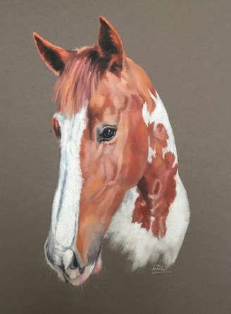 Skewbald Horse Pastel Painting