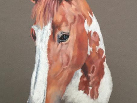 Commissioning a Pet Portrait in Pastel