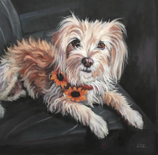 Kokoni x Cyprus Poodle pastel painting