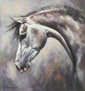 Grey Arab Horse Paint