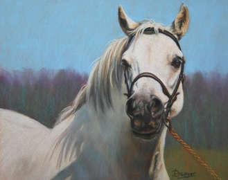 Grey Welsh Pony Pastel Painting