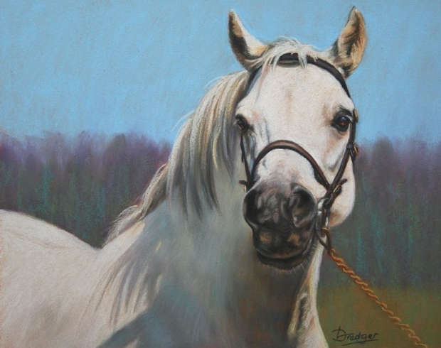 Grey Welsh Pony Pastel Painting