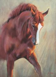 Holsteiner Dressage Horse