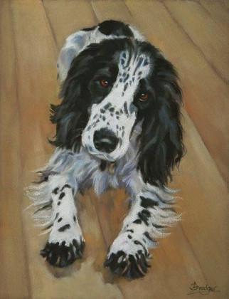 Springer Spaniel Painting