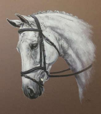 Grey Thoroughbred Dressage Horse Pastel Portrait