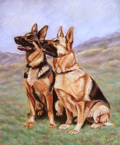 German Shepherds Pastel Painting