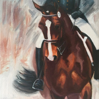 Bright Bay Dressage Horse