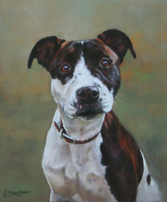Pastel portrait of a Staffordshire Bull Terrier