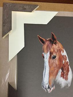 Skewbald Horse choosing frame