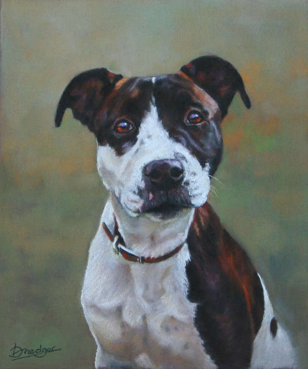 Staffie Portrait