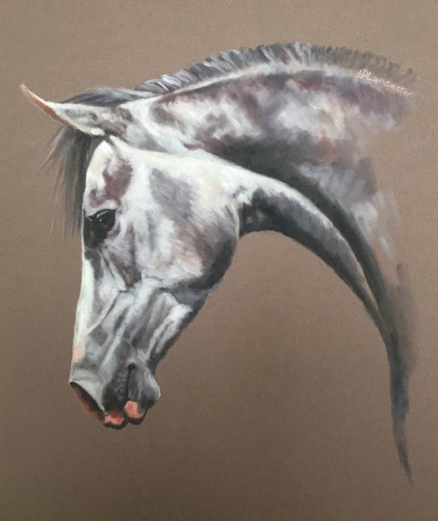 Arabian Horse Painting