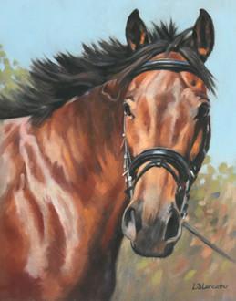 Irish Sport Horse Pastel Painting