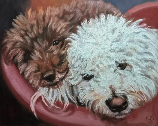 Miniature poodle and white Bichon Frisé painting