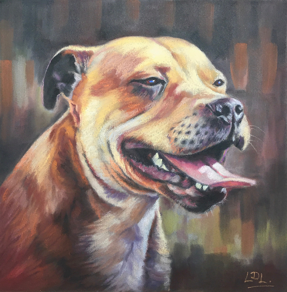 Pastel pet portrait of a Staffie Dog