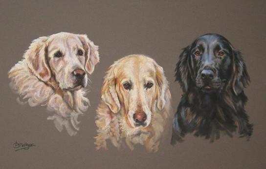 Three Labradors Dog Portrait