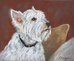 West Highland Terrier pastel portrait