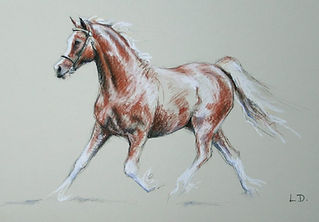 Welsh Pony Pastel Study