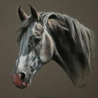 Arab Pastel Horse Portrait