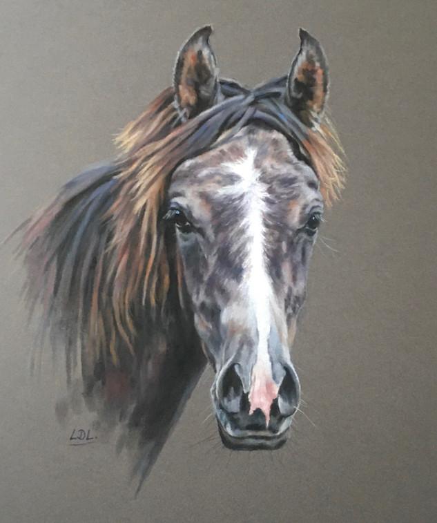 Grey Arab Yearling Pastel Portrait