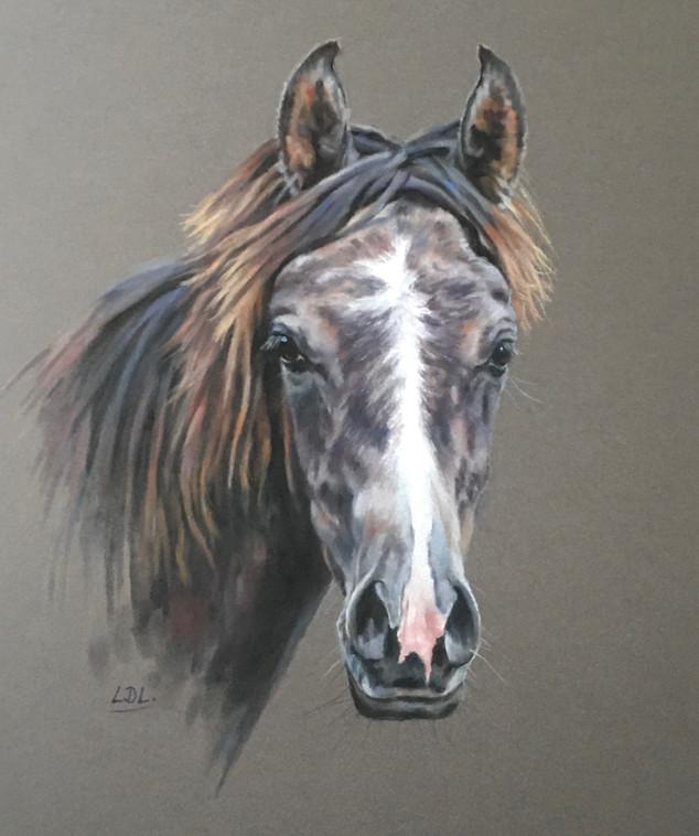 Arab Yearling Horse Portrait