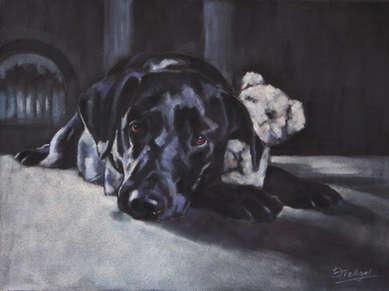 Black Labrador Pastel Painting