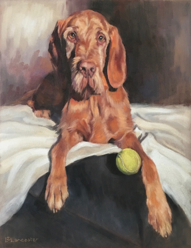 Hungarian Wirehaired Vizsla Painting