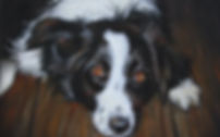 Border Collie Pastel Painting