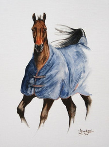 Horse with Blue Rug