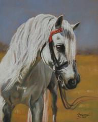 Lipizzaner Horse - Pastel Painting