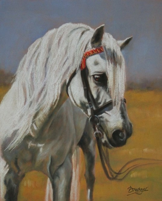 Lipizzaner Horse - Pastel Painting