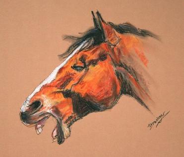 Horse Yawning Pastel Sketch