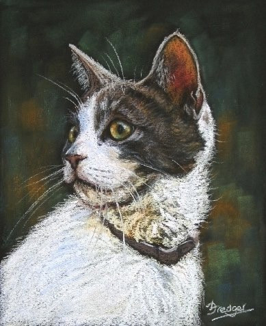 Tabby and White Cat Portrait