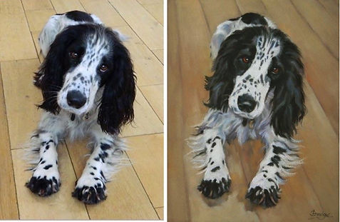 Black and White Springer Spaniel pastel painting