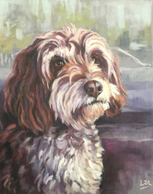 Cockapoo Portrait