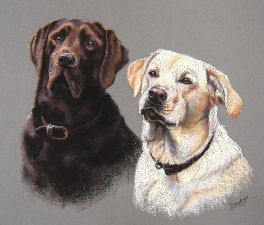 Chocolate and Yellow Labradors pastel portrait