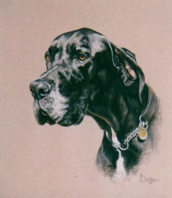 Great Dane Pastel Portrait