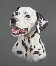 Dalmation Pastel Dog Portrait