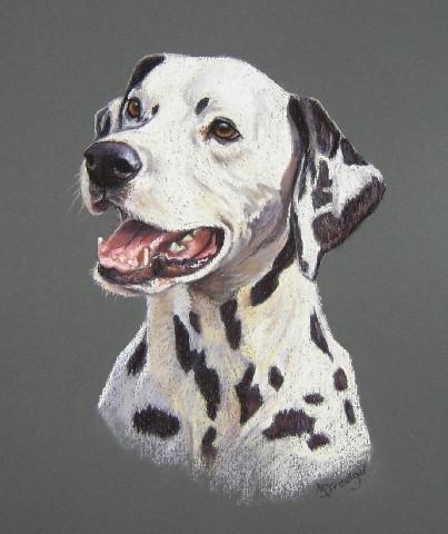 Dalmation pastel portrait painting