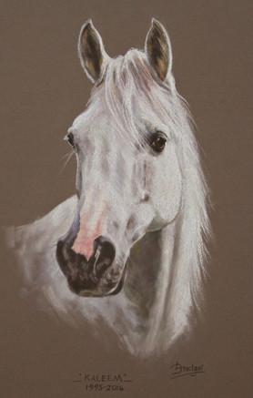 Grey Arab Commissioned Portrait