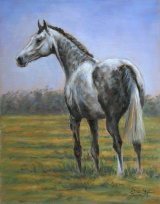 Grey Thoroughbred Horse Painting