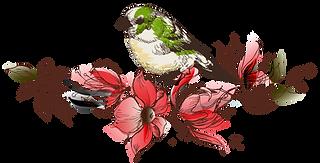 liseret-oiseaux.png